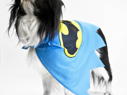 DC Comics...Now For Dogs!